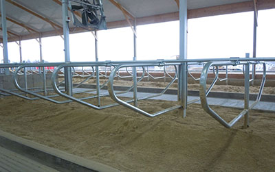 Freudenthal Cement In Post Freestalls